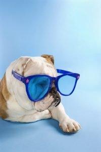 destin pet friendly rentals