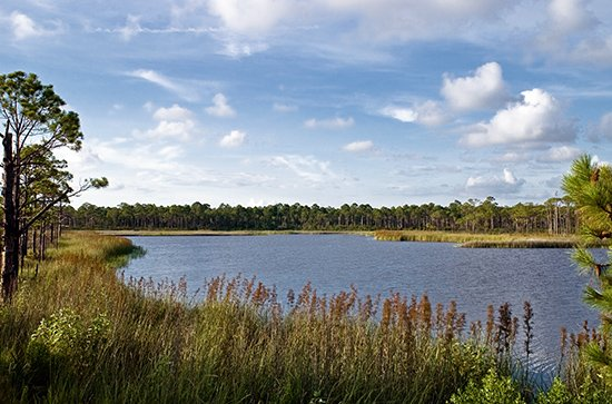 Homes Along Gulf Front - Discover the remarkable coastal dune lakes of 30A and be in awe of its beauty